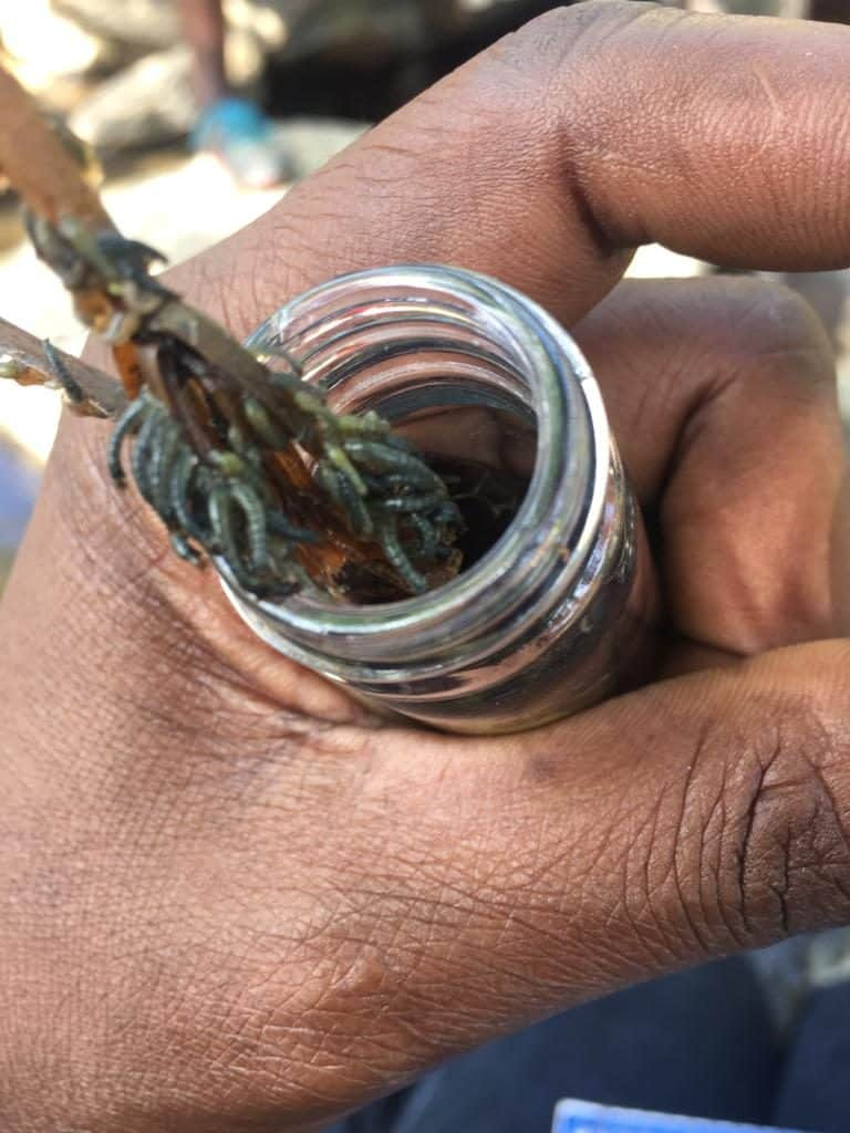 Entomological Surveillance of Onchocerciasis Transmission